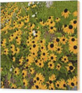 Black Eyed Susans-1 Wood Print