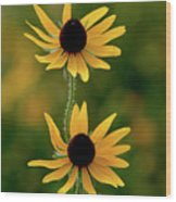 Black Eyed Susans 3276 H_2 Wood Print