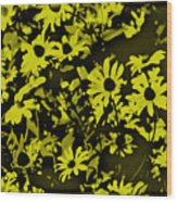 Black Eyed Susan's Wood Print