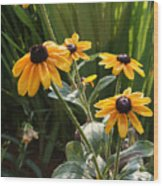 Black-eyed Susans Wood Print