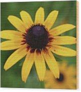 Black Eyes Susan And Friend Wood Print