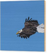 Black Feather Eagle Hunting Wood Print