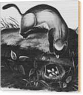 Black-footed Ferret Wood Print