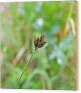 Black Grass Wood Print