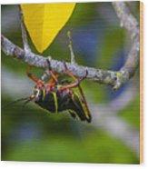 Black Grasshopper Wood Print