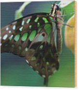 Black Green Tailed Jay 2 Wood Print