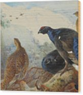 Black Grouse And Gamebirds By Thorburn Wood Print