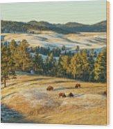 Black Hills Bison Before Sunset Wood Print