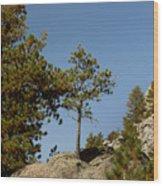 Black Hills Lone Tree Wood Print