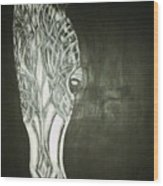 Black Horse Sight Wood Print