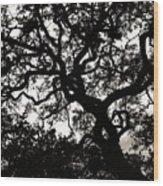Black Jack Oak Wood Print