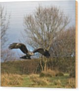 Black Kite Wood Print