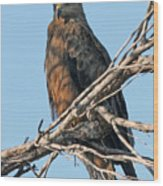 Black Kite Wood Print