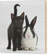 Black Kitten And Dutch Rabbit Wood Print