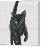 Black Kitten Wood Print
