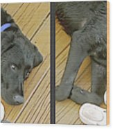 Black Lab - Gently Cross Your Eyes And Focus On The Middle Image Wood Print