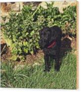 Black Labrador Retriever Puppy Wood Print