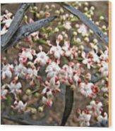 Black Lace Elderberry With Raindrops Wood Print