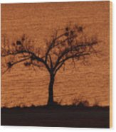 Black Lace Tree Wood Print