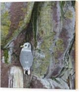 Black Legged Kittiwake Wood Print