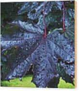 Black Maple Wood Print