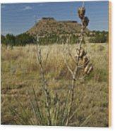 Black Mesa Cacti Wood Print by Charles Warren