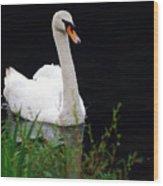 Black Mountain Swan Wood Print