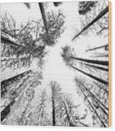 Black N White Sky-trees Wood Print