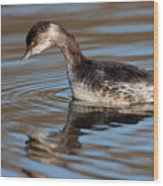 Black-necked Grebe About To Dive Wood Print