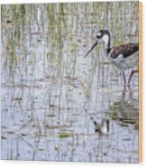 Black-necked Stilt, No. 2 Wood Print