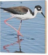 Black-necked Stilt Wading  Wood Print