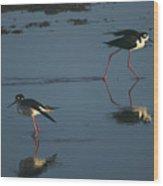 Black-necked Stilts - California Central Coast Wood Print