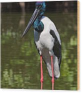 Black-necked Stork Wood Print