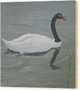 Black Necked Swan Wood Print