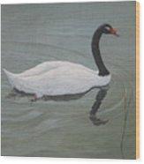 Black Necked Swan Wood Print