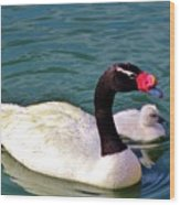 Black-necked Swan With Baby Wood Print