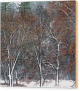 Black Oaks In Snowstorm Yosemite National Park Wood Print