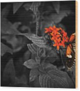 Black-orange Butterfly Wood Print