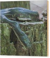 Black Rat Snake Wood Print