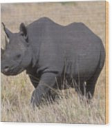 Black Rhino On The Masai Mara Wood Print