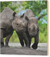 Black Rhinoceroses Wood Print