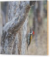 Black-rumped Flameback Aka Lesser Goldenback Wood Print