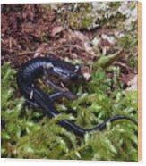 Black Salamander Wood Print