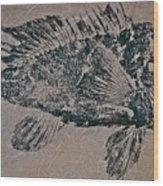 Black Sea Bass - Grouper - Rockfish Wood Print