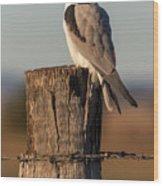 Black Shouldered Kite 4123 Wood Print