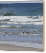 Black Skimmers In Ponce Wood Print