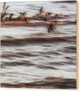 Black Skimmers Of Long Beach - Mississippi - Birds Wood Print