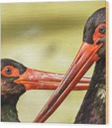 Black Storks Jerez De La Frontera Spain Wood Print