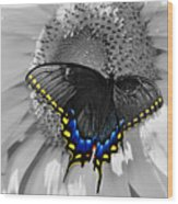 Black Swallowtail And Sunflower Color Splash Wood Print