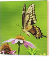 Black Swallowtail Butterfly Wood Print